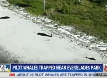Mŕtve veľryby na CNN