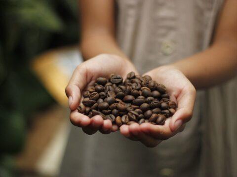 Káva zrnková